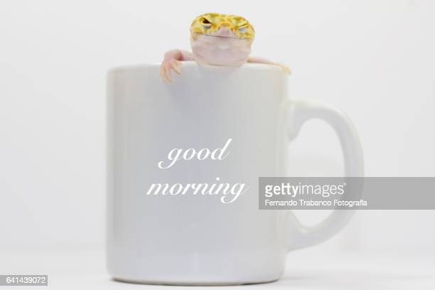 Animal in a cup winking and saying good morning