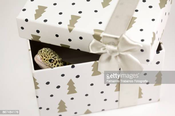 Animal in a gift box