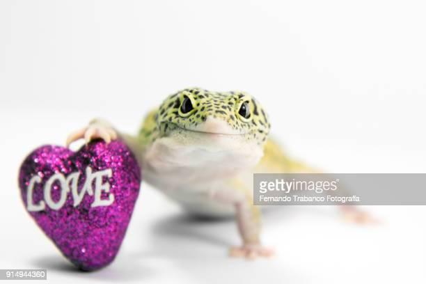 animal in love - gift hand stock-fotos und bilder