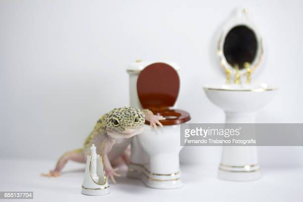 Animal in the bathroom raising the lid of toilet to shit