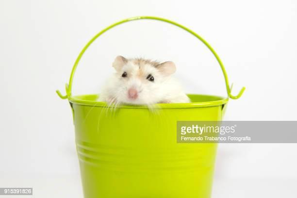 Animal inside a metal bucket