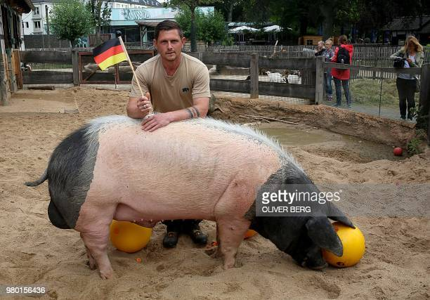 Animal keeper Jens Krause holds up a German flag as oracle pig 'Eberhard' nicknamed 'Harry' places his tip for the football match between Germany and...