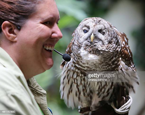 Animal Keeper Julie Reynolds holds Mr Magoo a blind bard owl and longtime resident at the animal science center at Disney's Animal Kingdom on Aug 19...