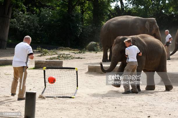 Animal keepers wear jerseys in the colors of Germany as they play football with a baby elephant on June 28, 2021 at the Tierpark Hagenbeck zoo in...