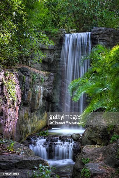 animal kingdom - gorilla falls - disney's_animal_kingdom stock pictures, royalty-free photos & images
