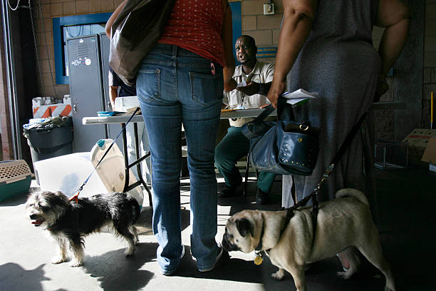 usa pets animal vaccination clinic pictures getty images
