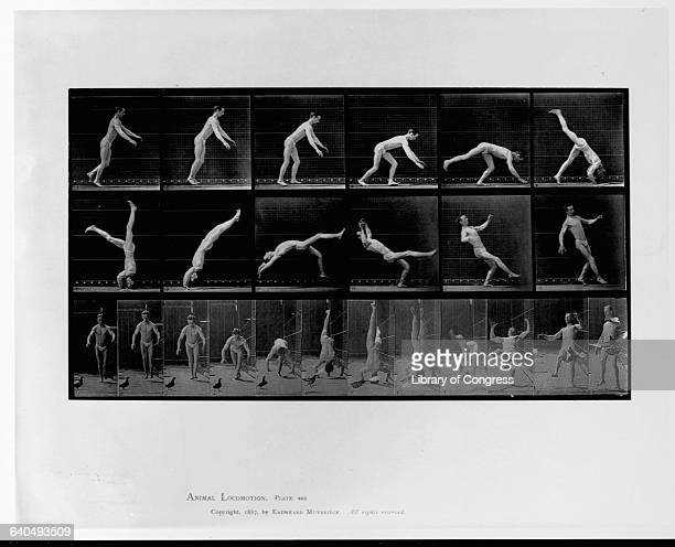 Animal Locomotion Plate 365 Man doing forward gymnastics flip 24 frames of front and side views photo by Eadweard Muybridge c1887 lot 3309 aerobat