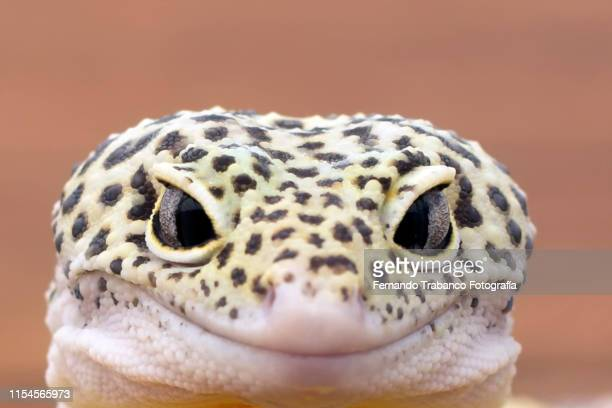 animal look - exotic pets stock pictures, royalty-free photos & images