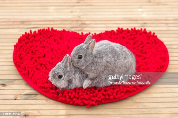 animal love - tierpaarung stock-fotos und bilder