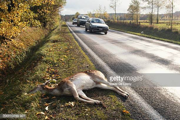 animal lying besides the road - roadkill stock photos and pictures