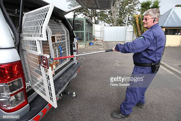 Animal Management Officer Bill brings a menacing dog to the Henderson Animal Shelter on July 27 2016 in Auckland New Zealand The Auckland Council...