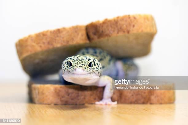 Animal on a sandwich with bread