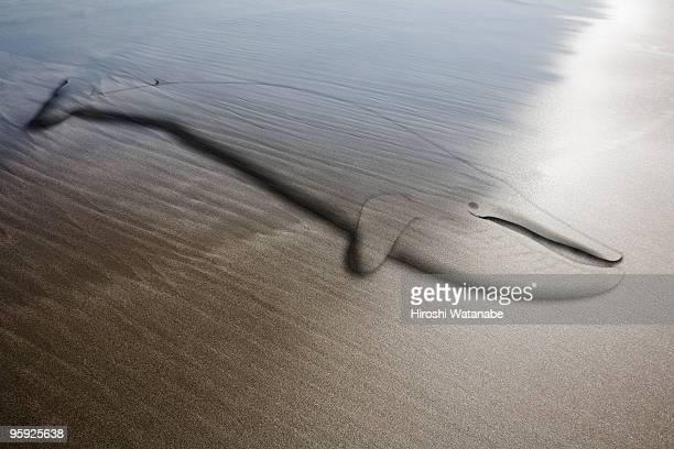 Animal on sand