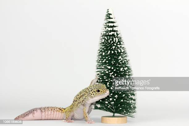 Animal on the Christmas tree