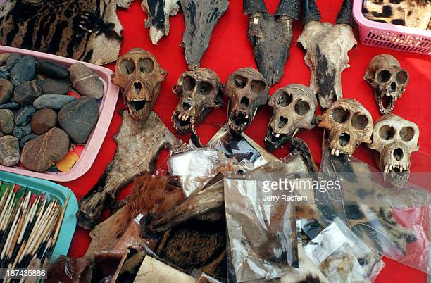 Animal parts sold at a market just over the border from the Thai town of Mae Sai