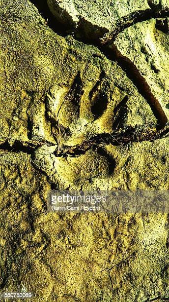 Animal Paw Print In Mud