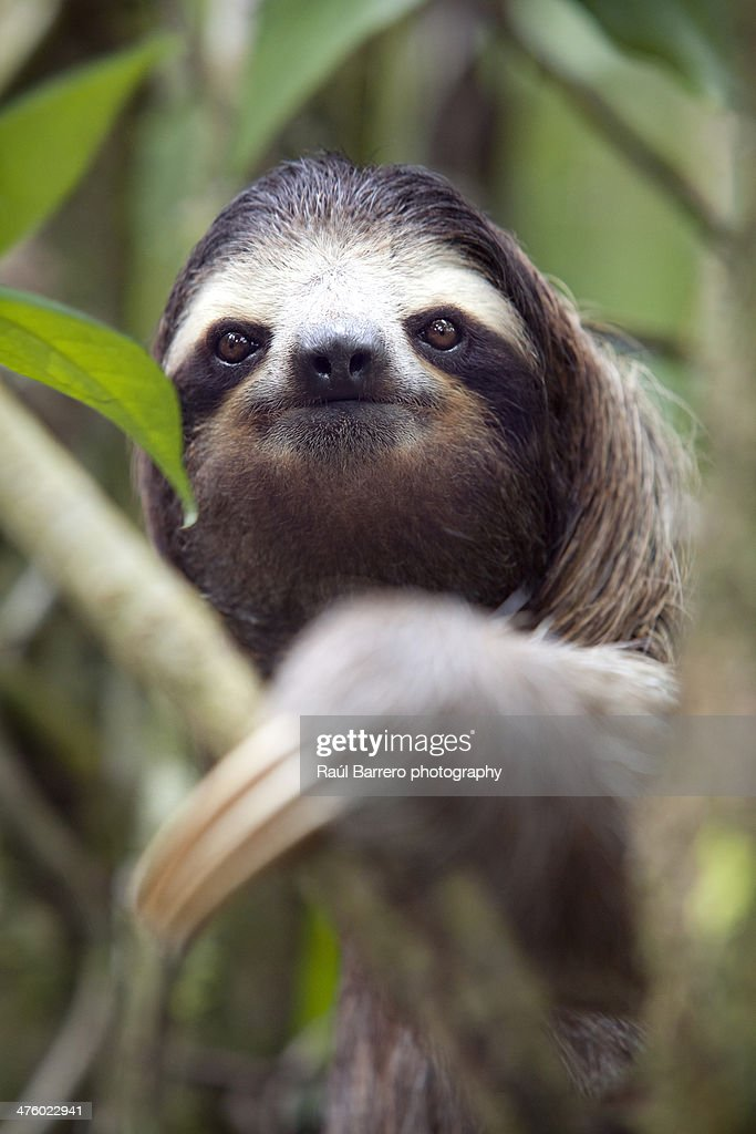 Animal : Stock Photo