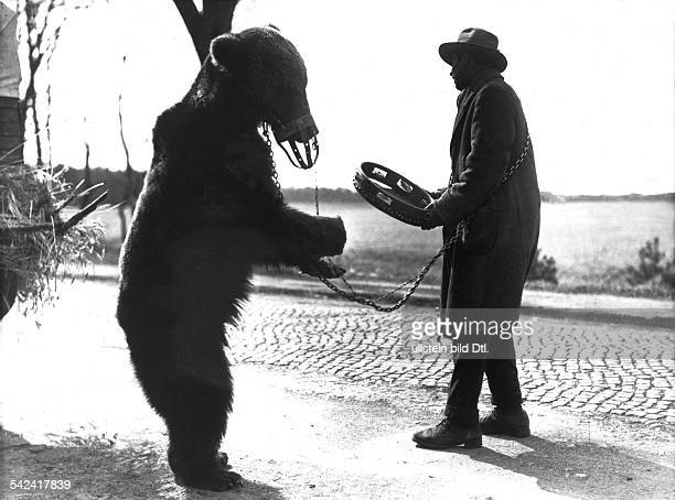 Animal pictures A man with a chained trained dancing bear mit muzzle 1933 Vintage property of ullstein bild