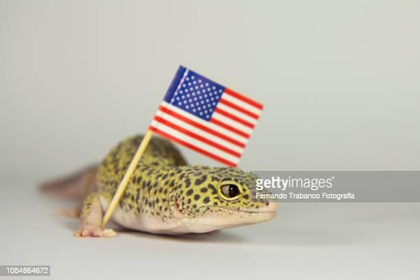 Animal raises the flag of United States