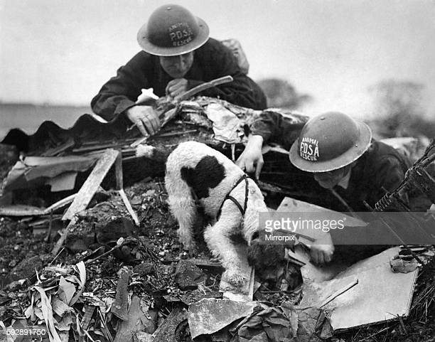 PDSA animal rescue dog attempts to locate survivors from air raid November 1942