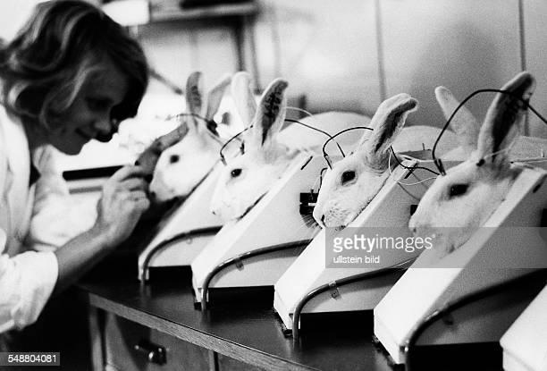 Animal testing on rabbits undated Photographer Jochen Blume Vintage property of ullstein bild