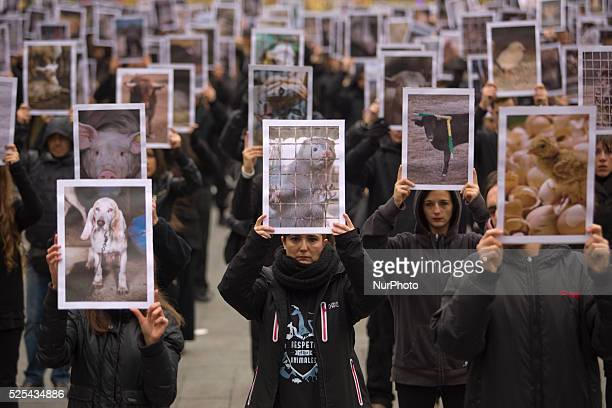 Animal right activists protest holding pictures of animals during a protest against animal abuse in Madrid SpainDec 2014 Animal rights activists from...