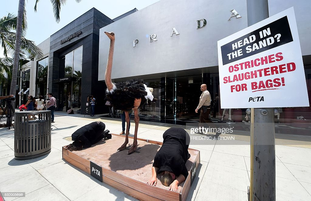 dc8b333d9b607d Animal rights activists from PETA protest in front of a Prada store ...