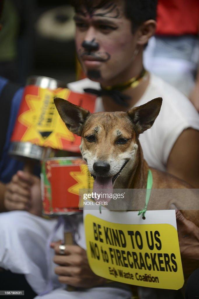 Animal rights advocates with their pets join in a campaign calling the public not to use firecrackers during the New Year celebration at the Ninoy Aquino Parks and Wildlife Center in Manila on December 29, 2012. The animal rights group called for the public to turn away from the noisy and polluting tradition of greeting the New Year with ear-splitting sounds from firecrackers and other pyrotechnic devices becuse not only the humans are affected but also the animals, particularly, cats and dogs. AFP PHOTO / Noel CELIS