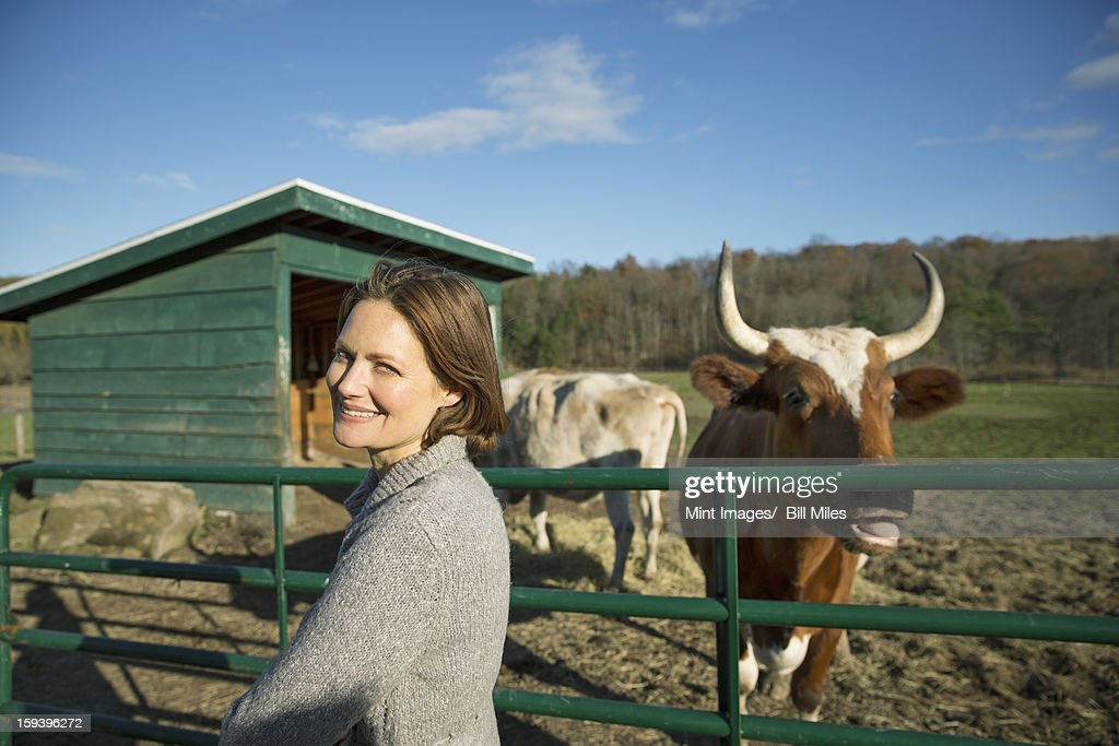 Animal sanctuary. A woman beside the fence, feeding two cows. : Stock Photo