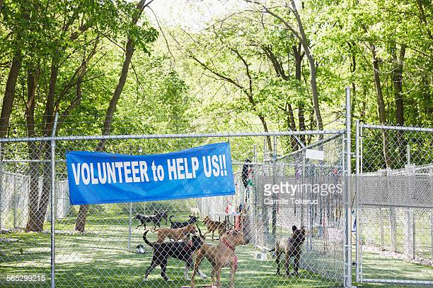 Animal shelter outdoors