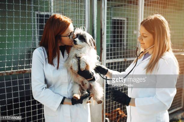 animal shelter - dog pound stock pictures, royalty-free photos & images