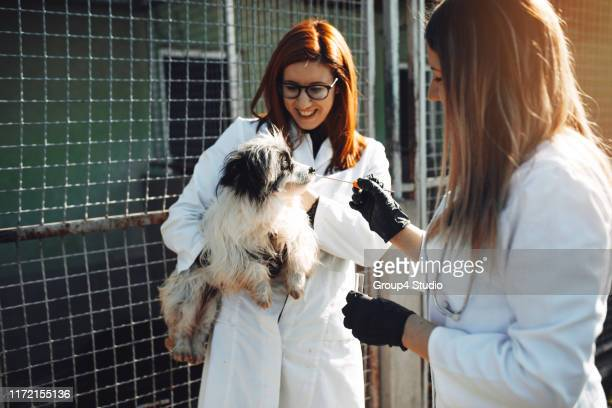 animal shelter - animal shelter stock pictures, royalty-free photos & images