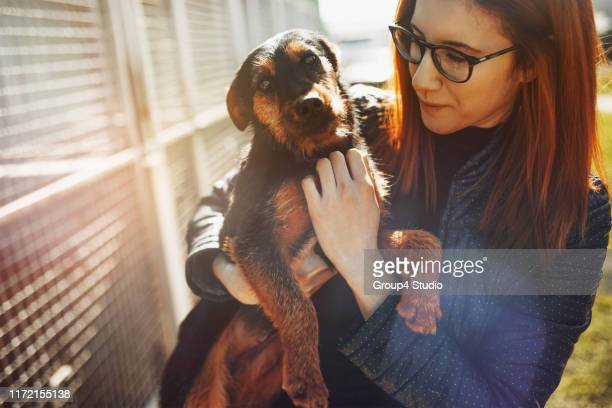 animal shelter - rescue stock pictures, royalty-free photos & images
