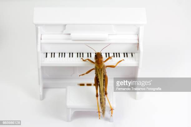 Animal singing and playing the piano in classical music concert