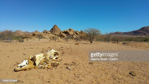 animal skeleton in desert against clear sky - animal bones stock photos and pictures