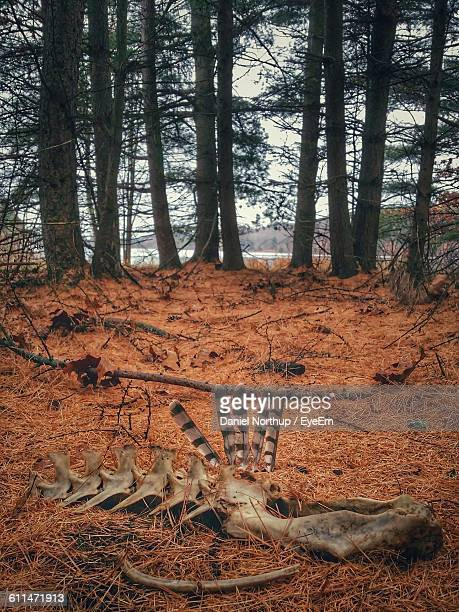 animal skeleton in forest - dead deer stock photos and pictures