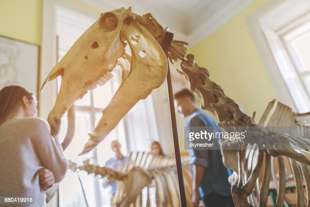 animal skeleton in the classroom with people in background. - animal skeleton imagens e fotografias de stock