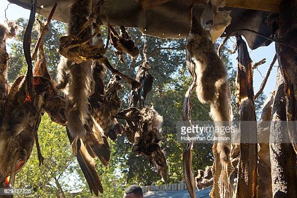 Animal Skins for sale at the Faraday Muti Market a popular outdoor market in downtown Johannesburg for traditional African healing