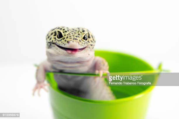 Animal smiling inside a metal bucket