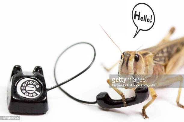 animal speaks on the phone and say hello - animal call stock pictures, royalty-free photos & images
