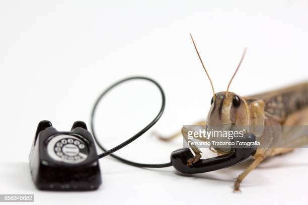 Animal speaks on the phone