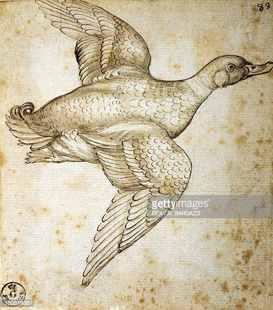 Animal studies duck by Leonardo da Vinci drawing 756 Orn