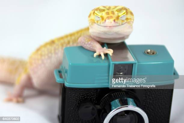 Animal taking a photo