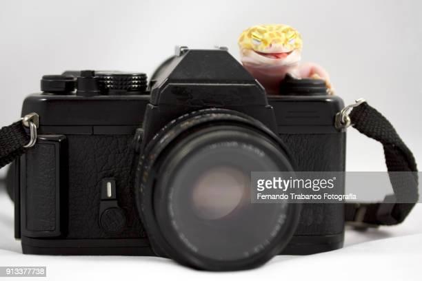 animal taking a photo - gijon stock photos and pictures