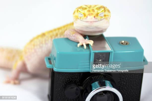 animal taking a photo - exotic pets stock pictures, royalty-free photos & images