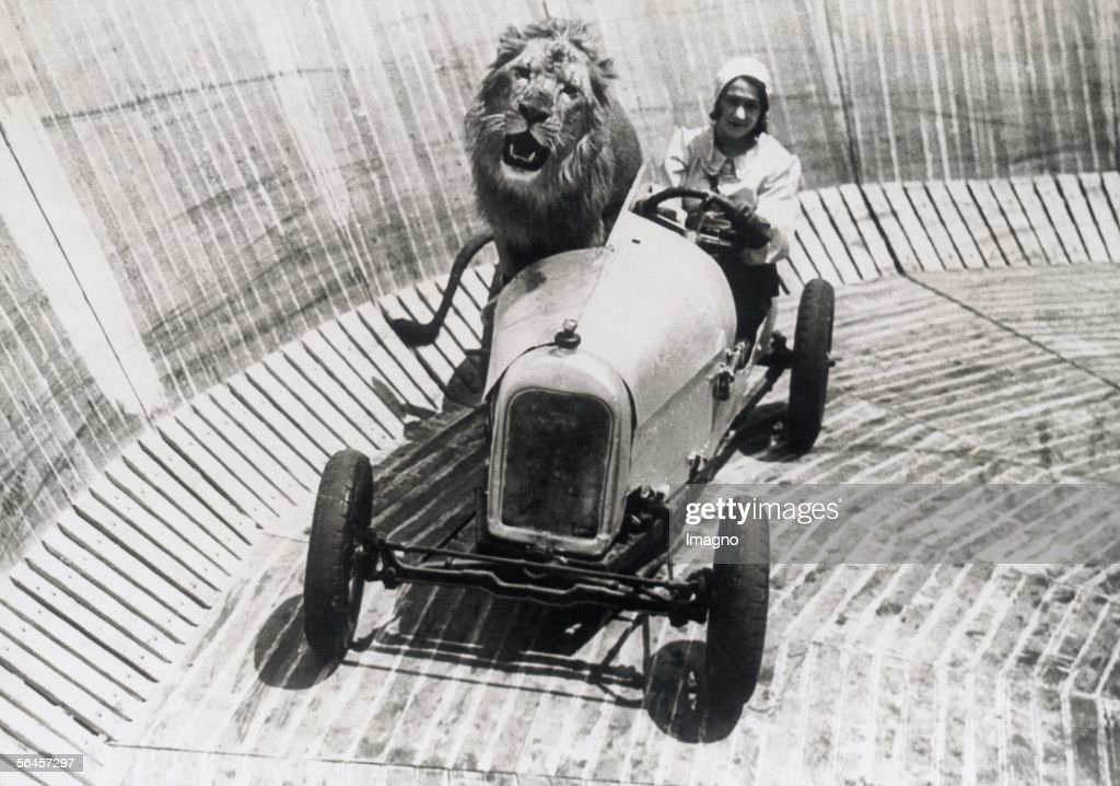 Animal tamer Marjorie Kemp with favourite lion : News Photo