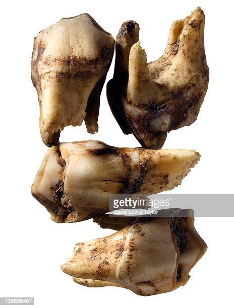 animal teeth - rotten teeth stock photos and pictures