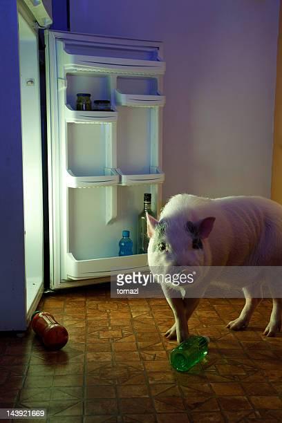 voleur-porc et d'un réfrigérateur - frigo humour photos et images de collection