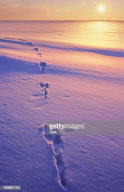 Tierische Spuren im Schnee