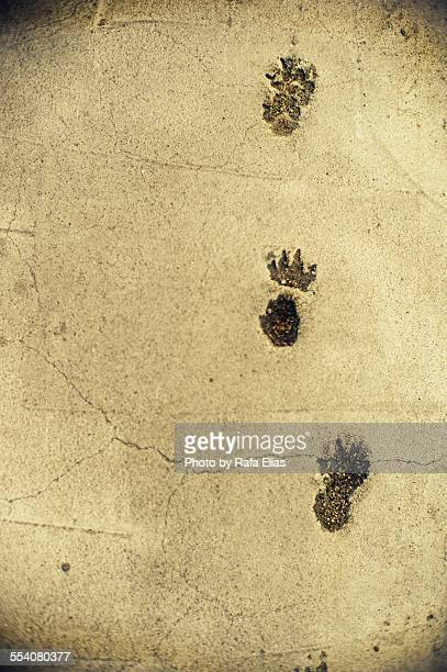 Animal tracks in the cement